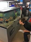 A Commonwealth Charter Academy students gets a closer look at fish in a tank at Petco in Cumberland County during a recent field trip.